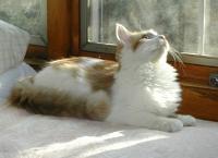 Dewey_bird_watching