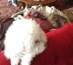 Willie, Max and Frida enjoy spending time together