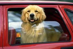 Cerenia Dog Travel