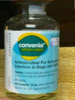 Convenia is an excellent choice for bacterial infections in dogs and cats.