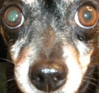 dog_nose_id