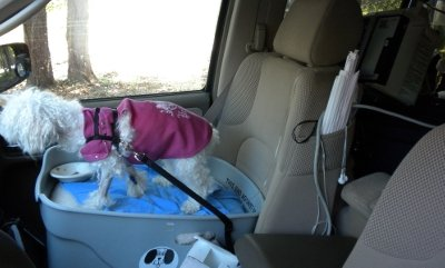 FidoRido keeps Pearl both safe and secure for her trip with IV fluids.