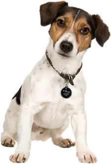 FurCode Pet ID Tags