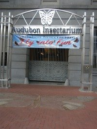 Audobon Insectarium entrance.  Notice the butterfly in the entrance brickwalk.