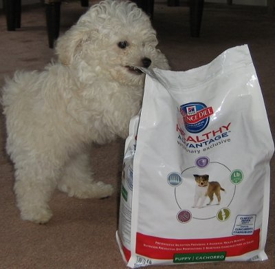 Willie LOVES his Healthy Advantage food so much he's willing to attack a bag weighing twice what he weighs!