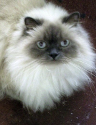 Even sweet, beautiful kitties like Spring Cove may have difficulties in the litterbox.