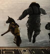 PTSD In Military Working Dogs