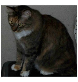 Obesity is a common cause cats overshooting the sides of their litterboxes.