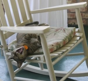 """Engineer Bob titled this """"Nobody knows how to relax like a cat."""""""