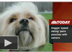 Speed Dating For Dogs