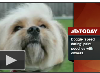 Speed Dating For Homeless Animals