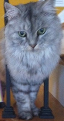 If our GrandCat, Edie, ever gets Swine Flu, H1N1, she will receive aggressive treatment.