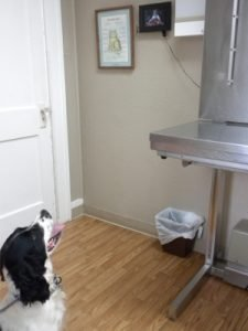 Queenie watches as the photos roll by on the electronic picture frame in one of our examination rooms.
