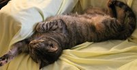 Sedona really knows how to take a nap!
