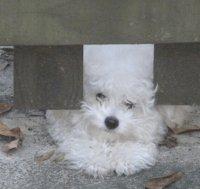 Amputation As Treatment For Osteomyelitis In A Dog